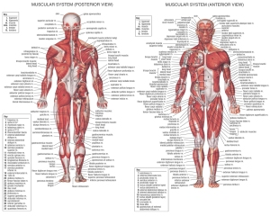 webfit nation human anatomy